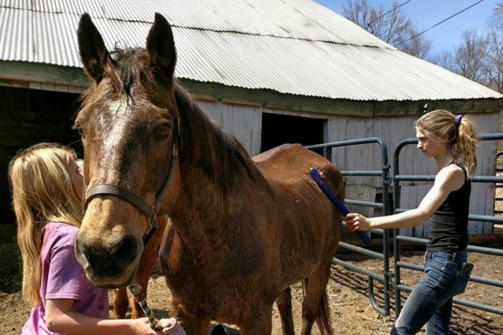 A non-profit horse rescue - saving horses from the slaughter
